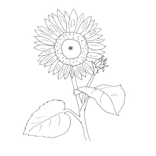 Plansa De Colorat Floarea Soarelui