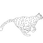 Tipareste si coloreaza: ghepard