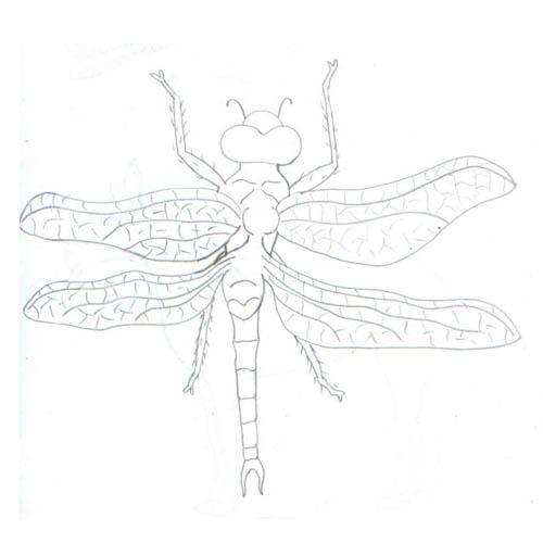 Tipareste si coloreaza: libelula