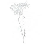 Tipareste si coloreaza: morcov