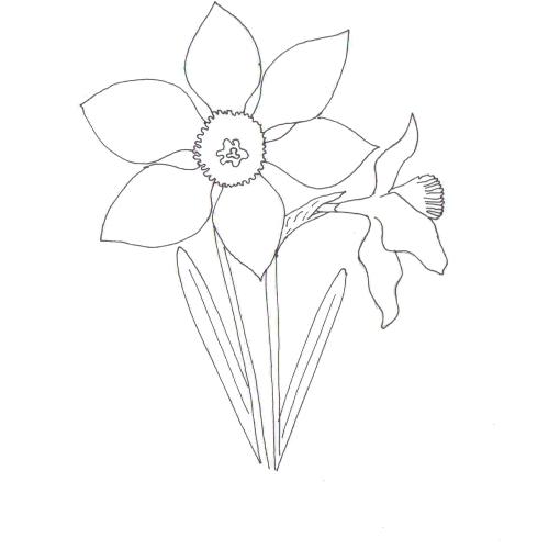 Plansa De Colorat Narcise