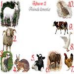 Rebus animale domestice: capra, berbec, miel, iepure, vitel, cal, gaina, rata, vaca, prepelita