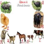 Rebus animale domestice: bivol, pui, berbec, pisica, cal, vitel, vaca, taur, bibilica