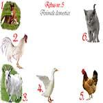Rebus animale domestice: manz, cocos, tap, rata, gaina, motan