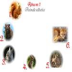 Rebus animale salbatice: veverita, urs, lup, iepure, cerb, vulpe