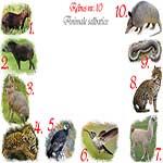Rebus animale salbatice din America de Sud: capibara, tapir, mara, jaguar, condor, colibri, lama, ocelot, anaconda, armadillo