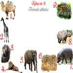 Rebus animale salbatice din Africa: camila, girafa, cimpanzeu, leu, elefant, ghepard, hipopotam, rinocer, cameleon