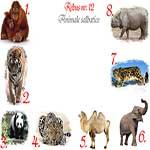 Rebus animale salbatice din Asia: urangutan, tigru, panda, leopard, camila, alefant, irbis, rinocer