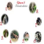 Rebus animale salbatice: zebra, lup, iepure, girafa, ied, pinguin, pantera, elefant