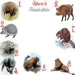 Rebus animale salbatice: zimbru, arici, bursuc, pantera, morsa, leu, castor, mistret