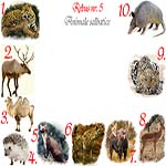 Rebus animale salbatice: jaguar, ren, camila, arici, jder, hiena, elan, antilopa, leopard, armadillo