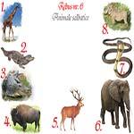 Rebus animale salbatice: girafa, aligator, crocodil, bizon, cerb, elefant, cobra, facocer