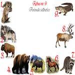 Rebus animale salbatice din America de Nord: puma, lup, bizon, grizlly, elan, mustang, raton, ren, aligator