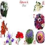 Rebus flori: ghiocei, gladiola, iris, garoafa, zambila, dalia, anemone, iasomie