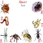 Rebus insecte: gargarita, rama, libelula, paianjen, viespe, carabus, viermi, greiere