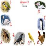 Rebus pasari: pitigoi, lebada, uliu, mierla, canar, gaina, pinguin