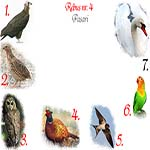 Rebus pasari: vultur, prepelita, bufnita, fazan, randunica, papagal