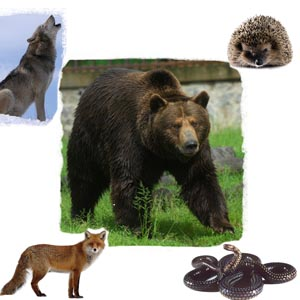 Test cu animale - Animale din padure(1)