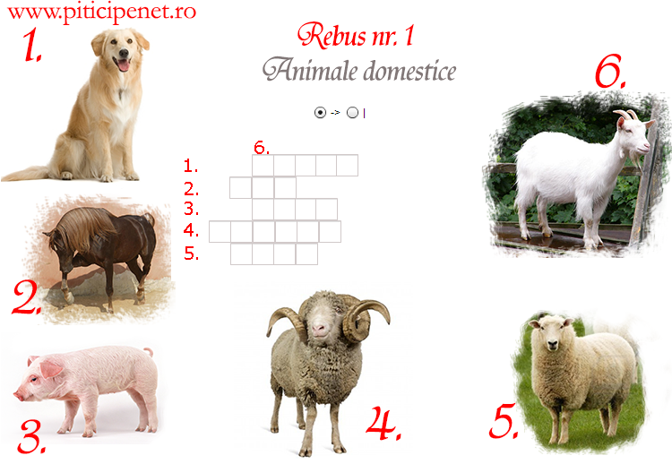 animale_domestice1