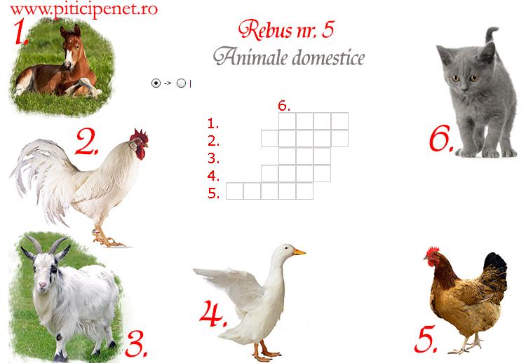 animale_domestice5