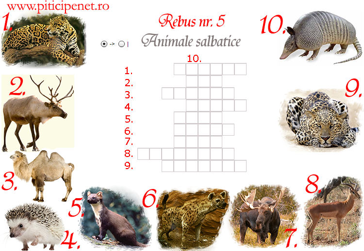 animale_salbatice5