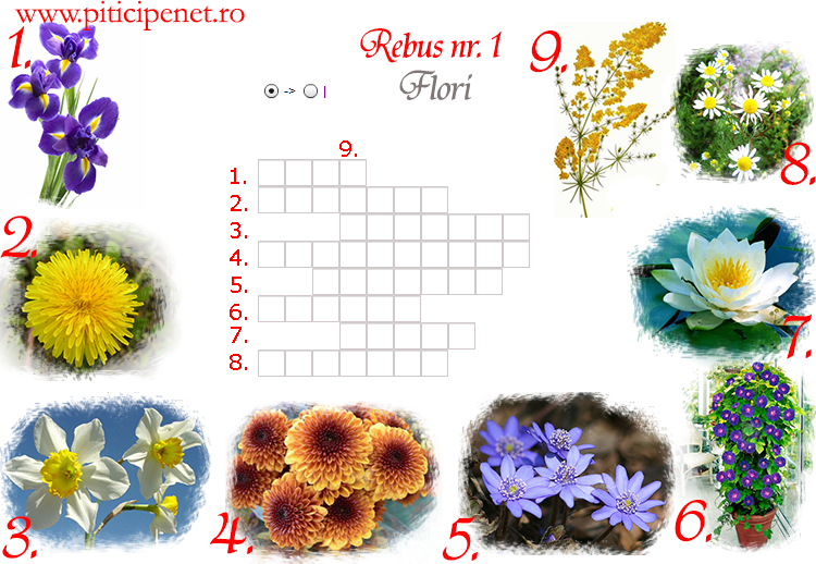 flori1
